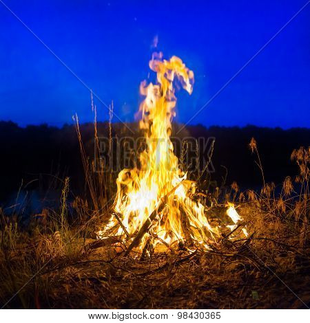 Big Campfire At Night In The Forest