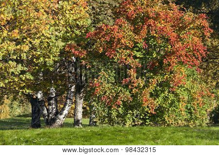 Colorful leaves on the trees.