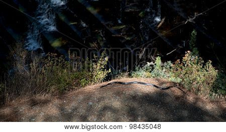 Large Whip Black Snake