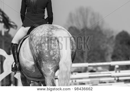 Horse Show Jumping Vintage