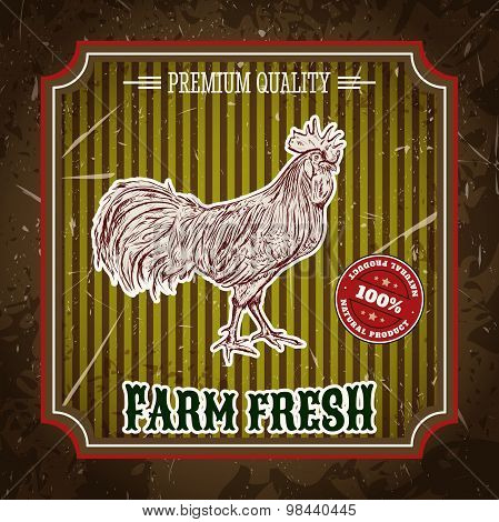 organic farm vintage label with chicken cock. Hand drawn vector illustration poster in sketch style