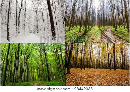 season forest wood  backgrounds.  Winter, Spring, Summer, Autumn
