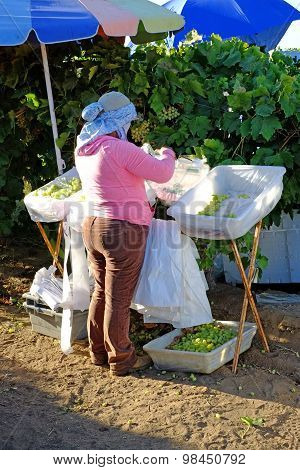Bagging Table Grapes