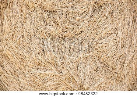 Golden straw texture background, close up
