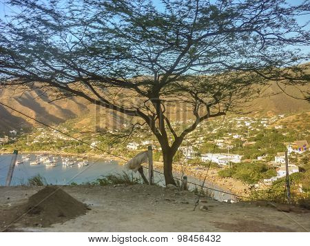 Aerial View Of Taganga Bay In Colombia