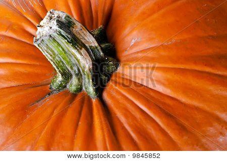Pumpkin V4