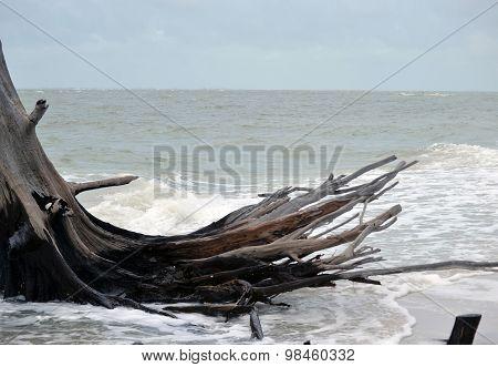 Tree at the ocean's edge