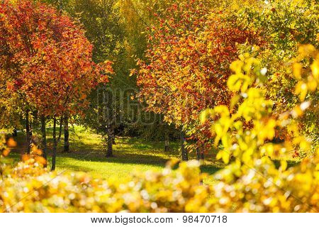 Colors of autumn, many beautiful trees in forest