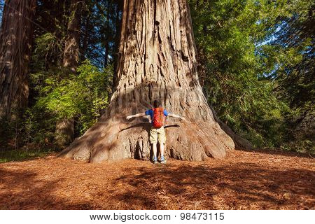 Man embraces big tree in Redwood California, USA