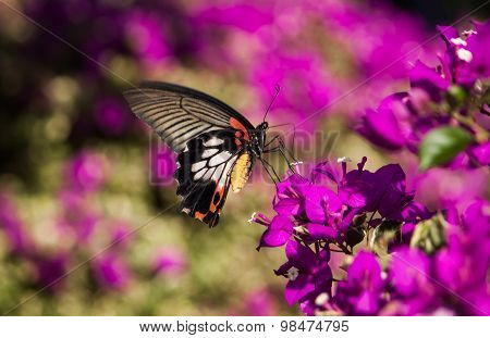Beautiful Butterfly On Pink Flowers Bokeh Blurred.