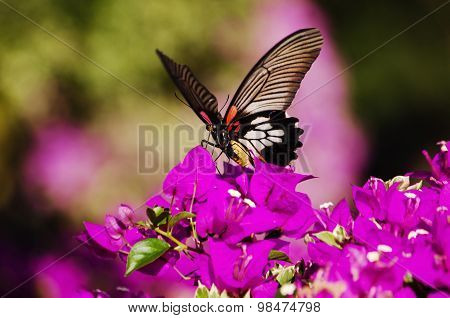 Beautiful Butterfly On Pink Flowers Blurred
