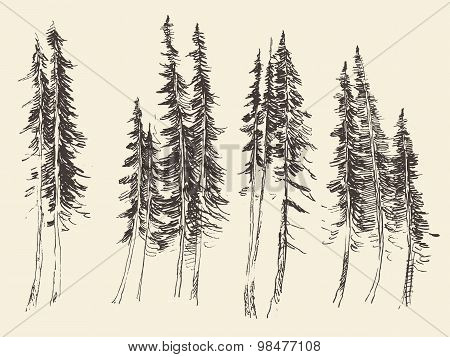 Fir forest engraving vector hand drawn sketch
