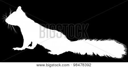 illustration with squirrel isolated on black background