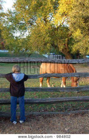 Horse400