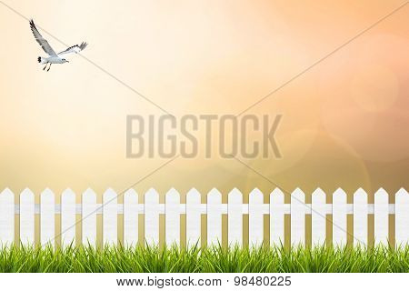 Grass And Fence Under Sunset Sky Blurred Background