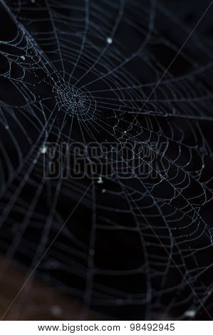 Spider Cobweb Closeup With Morning Dew Against Dark Background