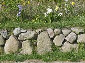 stock photo of fieldstone-wall  - Frisian stone wall planted with Hyacinths on the Island of Sylt Germany - JPG