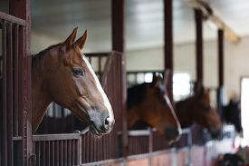 image of headings  - Head of horse looking over the stable doors on the background of other horses - JPG