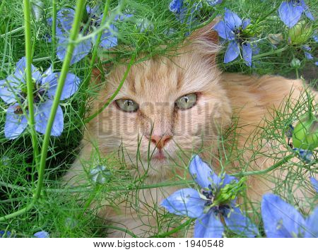 Cat Among Flowers 2