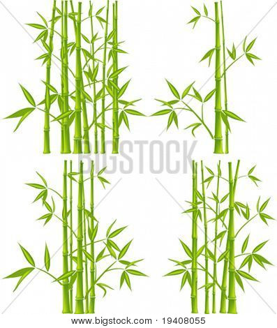 Bamboo, vector illustration (mesh)