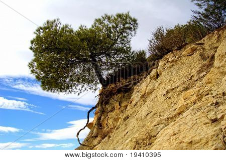 alone tree on the rock, Mediterranean scrub. Erosion effects
