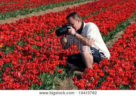 Photographer taking pictures of red tulips