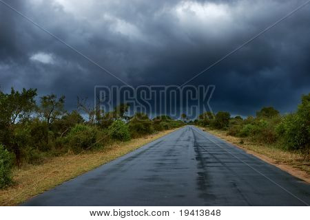 Old wet tar road in straight line between bushes; rainy weather