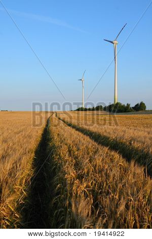 Power generating wind turbines on cultivated wheat field and rural road, Poland