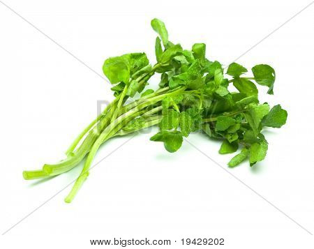 fresh watercress isolated on pure white