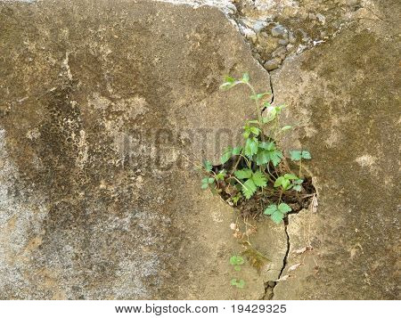 plant growing from a cavity in a stone wall