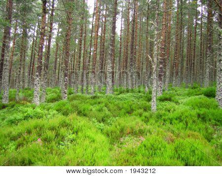 Treesheather