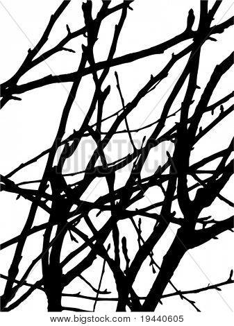 branch look like wain