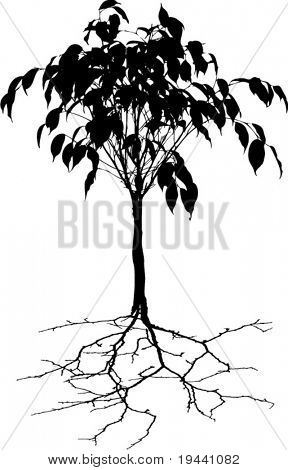 abstract young tree with root - vector illustration