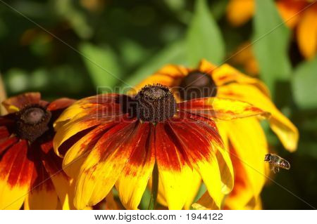 Bee To Flower