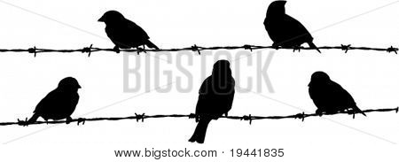symbolic illustration of freedom or prison