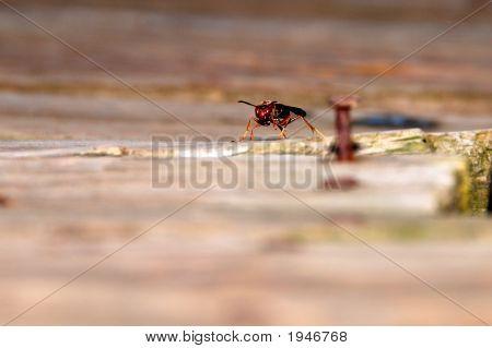 Wasp Gaurd