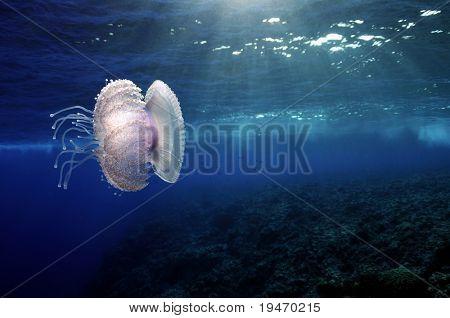 Jellyfish and sunlight