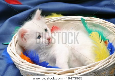 White kitten in his basket.