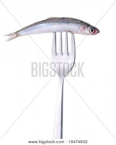 Anchovy on fork isolated on white - a series of FOOD ON FORK images.