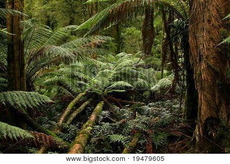 Regenwald, Australien