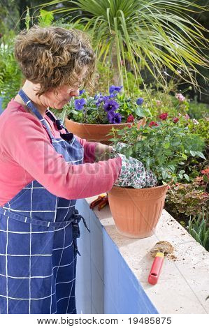 woman taking care of  roses in a pot in her garden