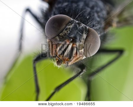 Extreme close up of fliegen Kopf
