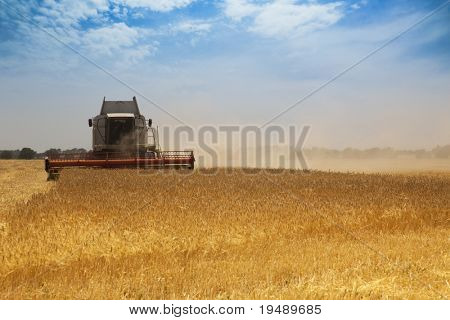 Harvest time / A combine harvester working in a wheat field