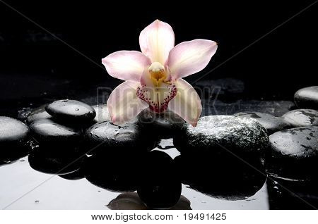 Macro of orchid and therapy stones