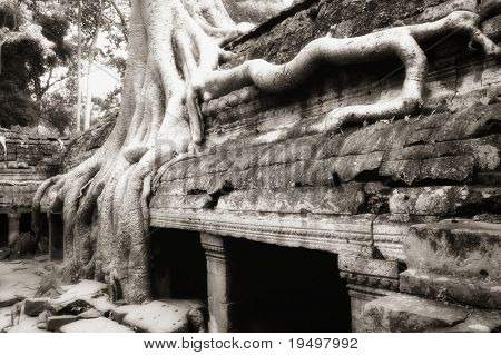 Huge banyan tree roots seized upon ruin walls at Ta Prohm temple, Angkor, Cambodia, infrared-monochrome image.