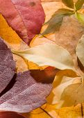 stock photo of fall leaves  - leaf background - JPG