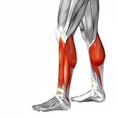 Concept conceptual 3D illustration fit strong back lower leg human anatomy, anatomical muscle isolat poster