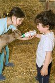 Постер, плакат: мальчик и Девочка кормит Бэй коза с baby бутылки в ферме