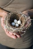 picture of bird-nest  - nest with eggs in woman - JPG