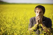 stock photo of hay fever  - Young man in yellow canola field blowing his nose and suffering from pollen allergy - JPG